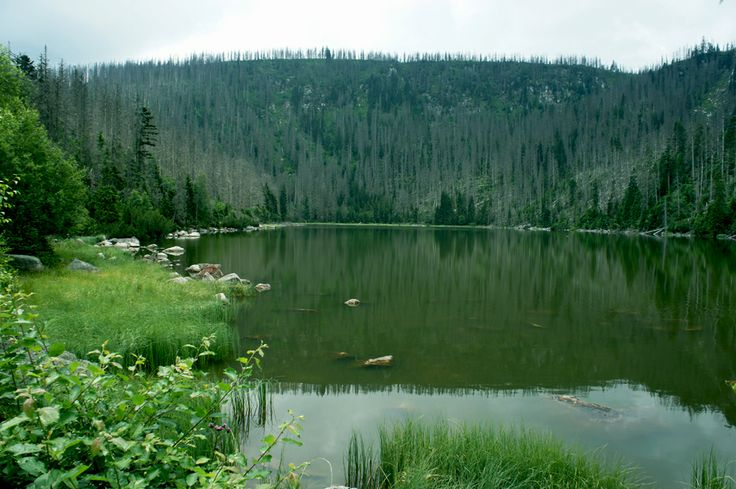 Plešné jezero - Šumava - Böhmerwald - Czech republic