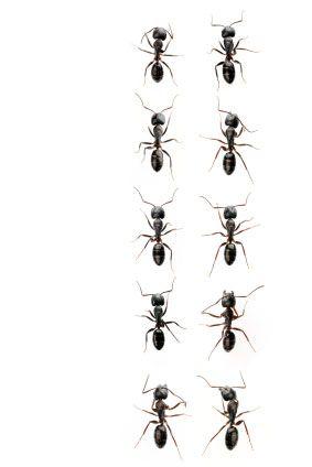 ants - Google Search