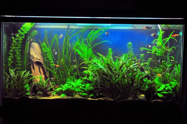 Why Stocking Your Aquarium Evenly is Important top middle and bottom dwelling fish