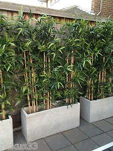 bamboo planter box great idea to cover garage wall poolside.