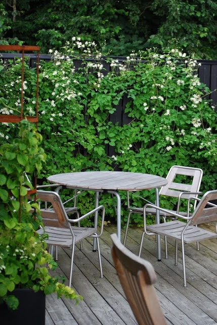 clematis summer snow mot ett plank tr dg rd. Black Bedroom Furniture Sets. Home Design Ideas