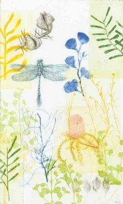 Giant Blue Dragonfly, Hakea Seeds & Banksia