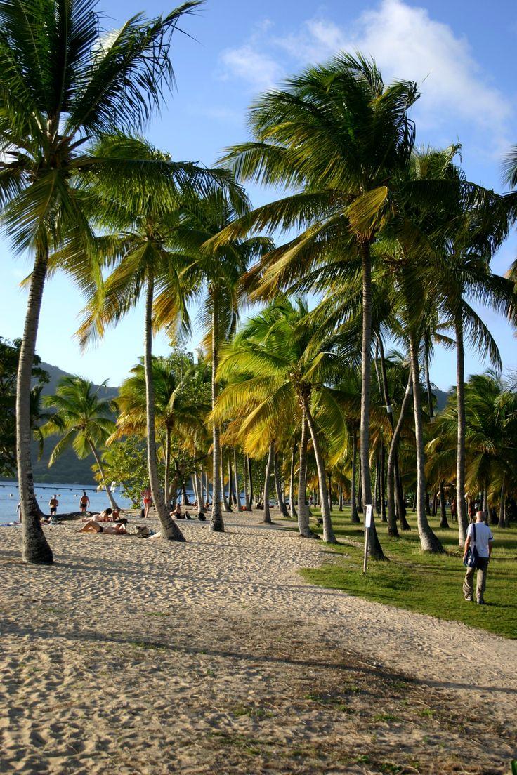 La plage de Saint Anne - Martinique -   La Martinique fait partie de l'arc des Petites Antilles, chaîne volcanique entre la mer des Caraïbes et l'océan Atlantique.  L'île fascine par la diversité et la beauté de ses paysages : le nord se partage entre forêt tropicale, et plages de sable noir. Le sud offre des plages de sable d'or et une succession d'anses tranquilles, de baies piquetées d'îlots pour le plus grand bonheur des amateurs de nautisme.  #martinique #antilles