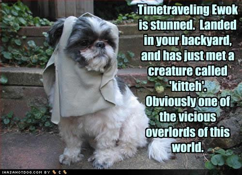 Shih Tzus really do resemble Ewoks.