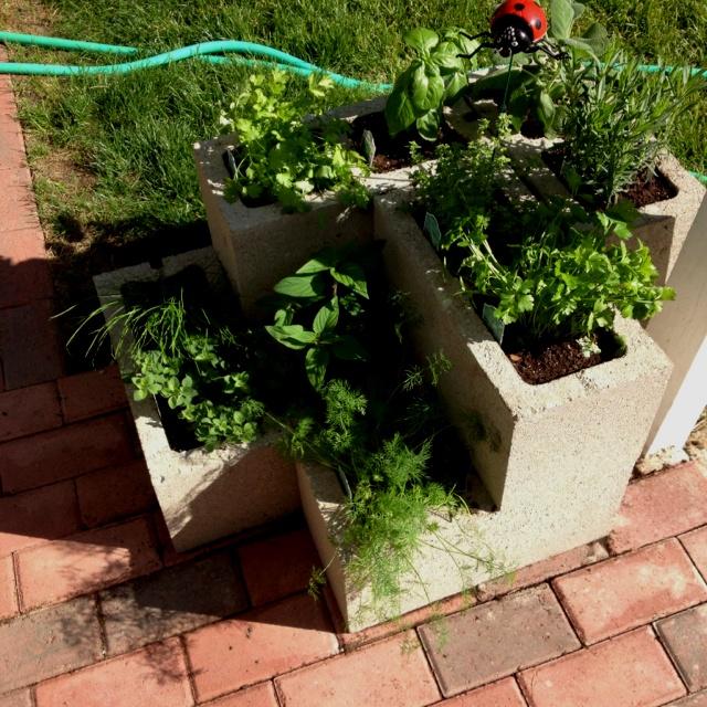 Herb Garden In Cinder Blocks Around The Home Pinterest