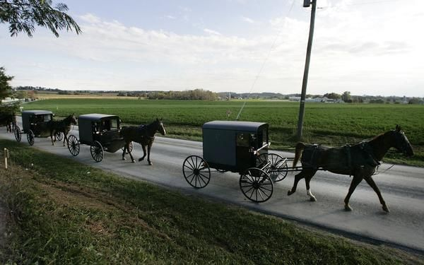 amish beliefs 1 1 j am acad nurse pract 1992 jul-sep4(3):117-22 the health beliefs and practices of an old order amish family palmer cv in caring for people from different.