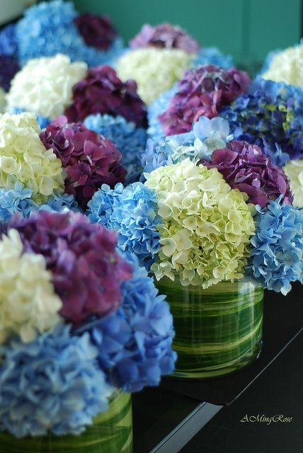 multi-color hydrangea centerpieces — I like the leaves in the vase