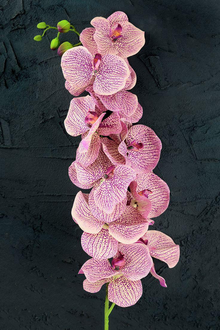 Silks pothos desk top plant in pot amp reviews wayfair - Orchid Flower Mauve 60in