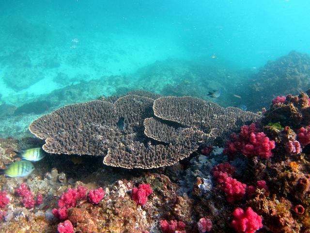 Julian Rocks diving - awesome but rough seas
