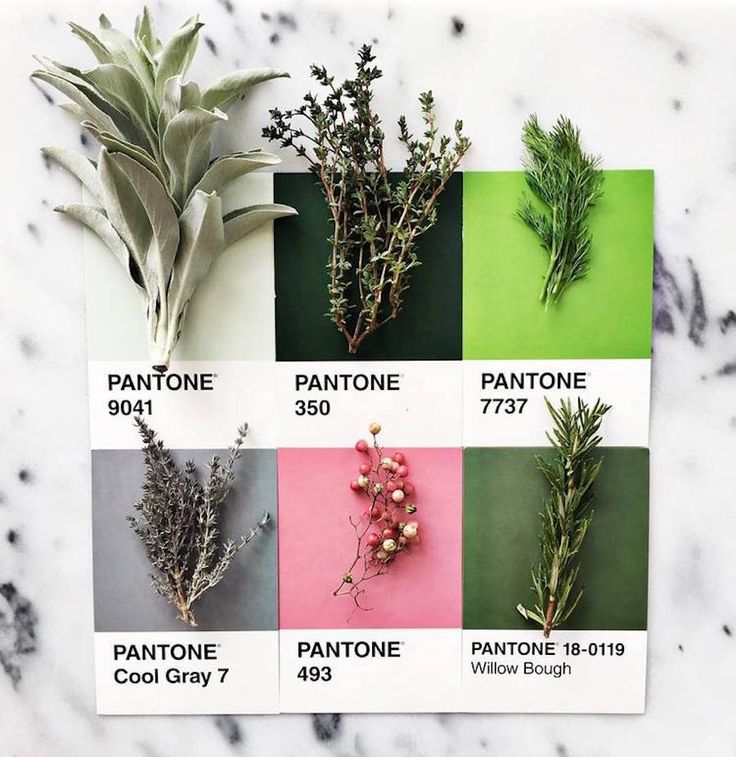 Gourmet and Colorful Pantone Food Series                                                                                                                                                                                 More