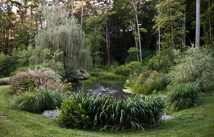 Best 25 Coy Pond Ideas On Pinterest Koi Ponds Koi Pond