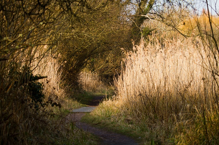 Reedbed  by parallel-pam: Galleries, Parallel Pam, Landscape