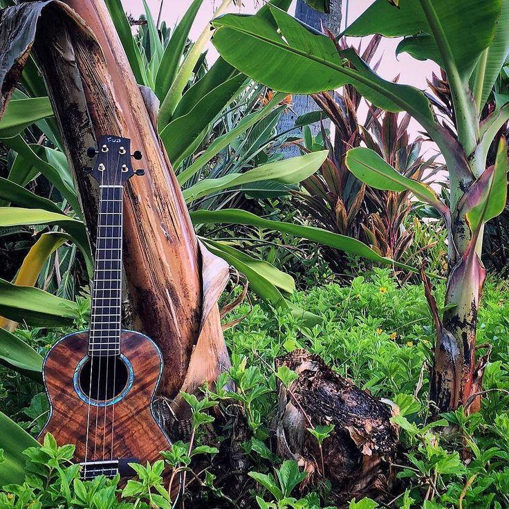 #Repost @fun.ukulele  Cast your vote: or ? . . . .   #ukulelelove #exploretheworld #luthier #808state #luthiery #ukulele #ukuleles #ウクレレ #укулеле #ukelele #ukelife #travelstoke #wanderlusting #puraplaya #kauailife #momento #wonderlust #ukulele #uke #ukelover #ukelove