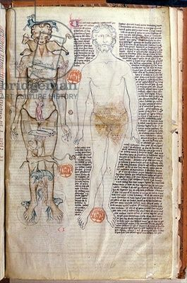 F.116v The Relationship between the Human Body and the Signs of the Zodiac, from a medical treatise by Abul Qasim Khalaf ibn al-Abbas al-Zahrawi (Abulcasis) (936-1013) translated by Gerard de Cremone (1114-870 (vellum) by French School, (14th century) - Bridgeman art images & historical footage for licensing
