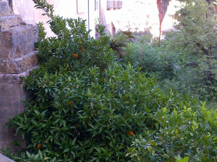 Arance di Calabria (non avendo trovato bergamotti!)