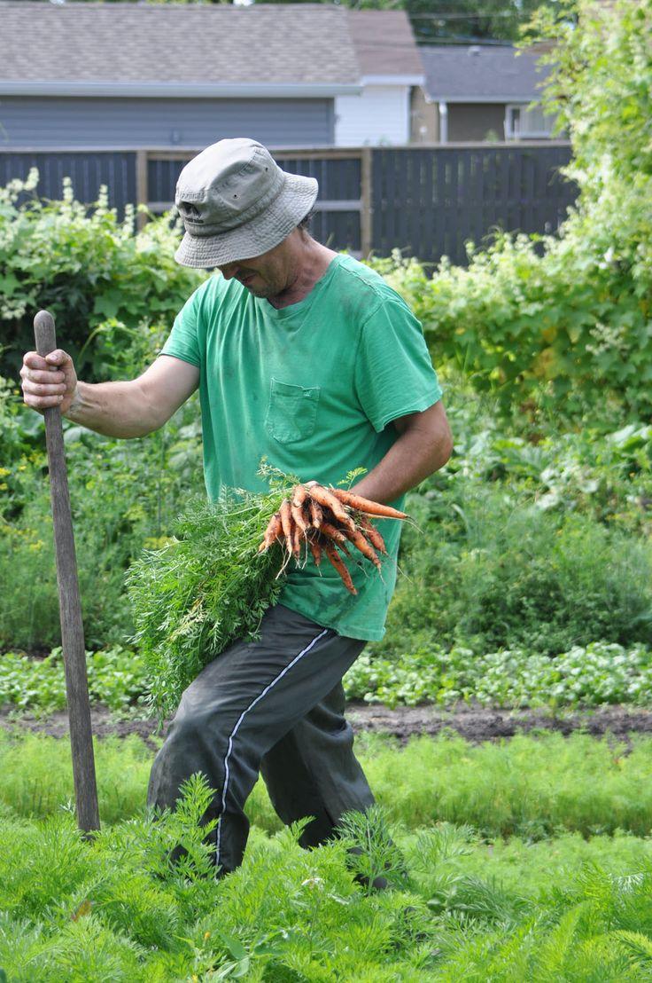 Deborah Wally's garden Backyard farming, Farming in