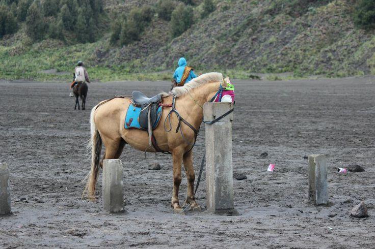 Horse, Mt. Bromo Probolinggo, Jawa Timur http://goo.gl/VJ0G6r
