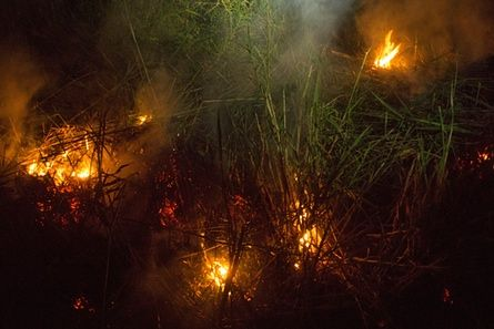 Peat fires can smoulder away below the surface making them exceedingly difficult to extinguish