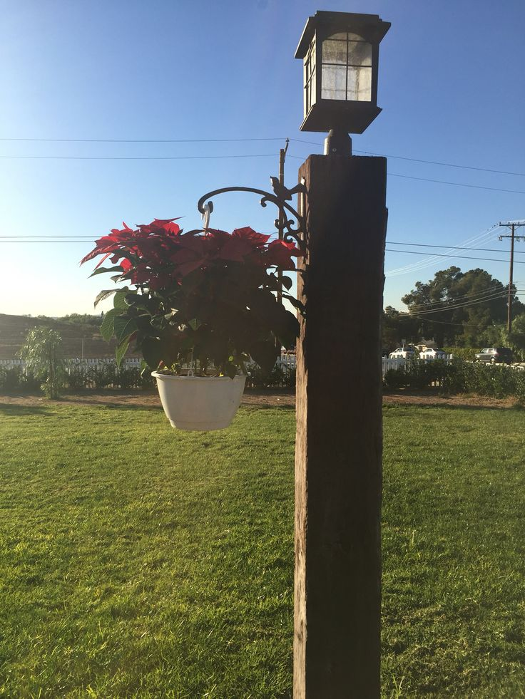 Hanging Poinsettia With Wrought Iron Bracket From Hobby