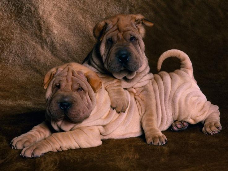 Papel de parede Animais cutes, filhotinhos de gatinhos e cachorrinhos -Animals Wallpapers- - * DOCE CANTINHO *