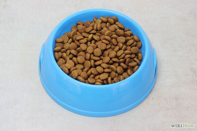 How to Stop Your Cat's Diarrhea: 13 Steps (with Pictures)