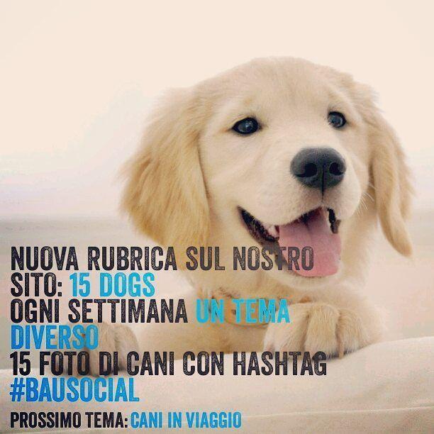 Partecipa alla nostra nuova rubrica: 15 DOGS! Posta la foto del tuo cane davanti un monumento o una piazza famosa della città che hai visitato e taggala con hashtag #BauSocial! Le 15 foto più belle le pubblicheremo su www.bausocial.it  Ogni settimana un tema diverso! Maggiori info in DM . . #cane #cani #dog #dogs #mydog #dogoftheday #milano #italia #igers #igerslombardia #igersmilano #pescara #love #life #instadog #bologna #instadog #insta_dog #doglover #puppy #tbt #tagsforlikes #followme…