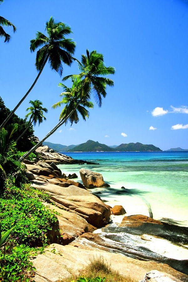 Palms in Seychelles Beach, Ikaria Greece