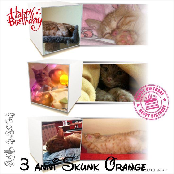 #happy #birthday Skunk Orange 3 anni