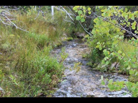MARATHON GOLD Placer Mining Claim, Trout Creek, Beaverhead County, Mon | Department of Land Transfer Information