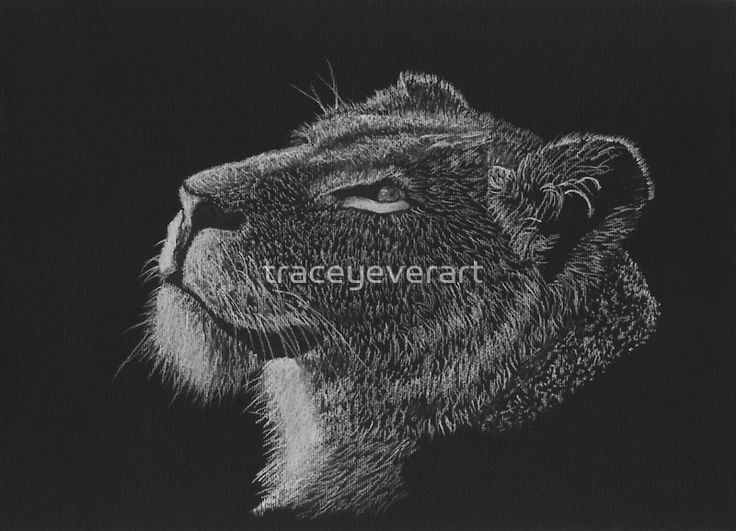Lioness drawing in black and white - pastel and charcoal by Tracey Everington of Tracey Lee Art Designs