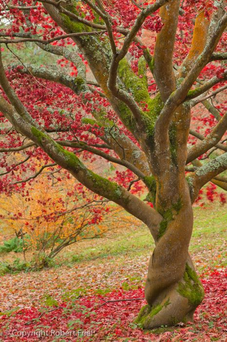 twisted tree trunk in the fall landscape