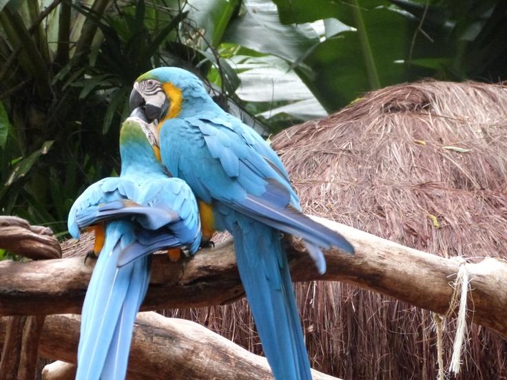 Parque Das Aves (Bird Park) - Foz do Iguaçu, Paraná, Brasil