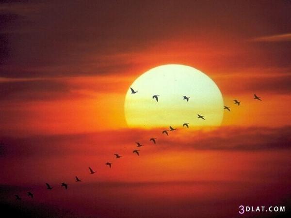 صور غروب الشمس 2019 احلى صور لغروب الشمس غروب الشمس 2019 صور 2019 للغروب Sunrise Wallpaper Good Morning Images Special Good Morning