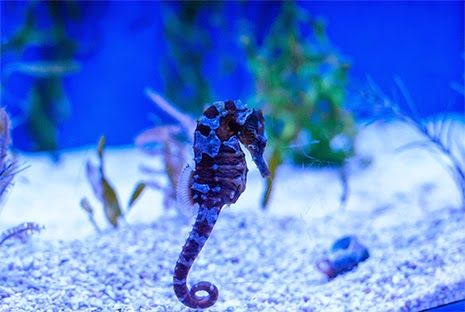 Marine Depot Blog: How to Set Up a Seahorse Aquarium