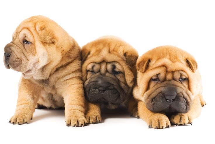Fotografia de Perros cachorros  http://www.wonderguau.com