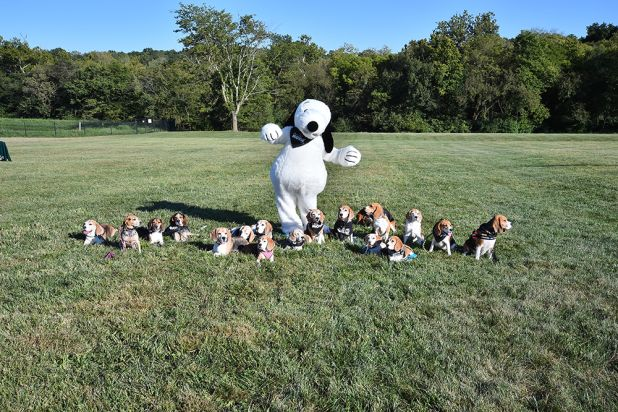 Best 25+ Snoopy costume ideas on Pinterest | Charlie brown ...