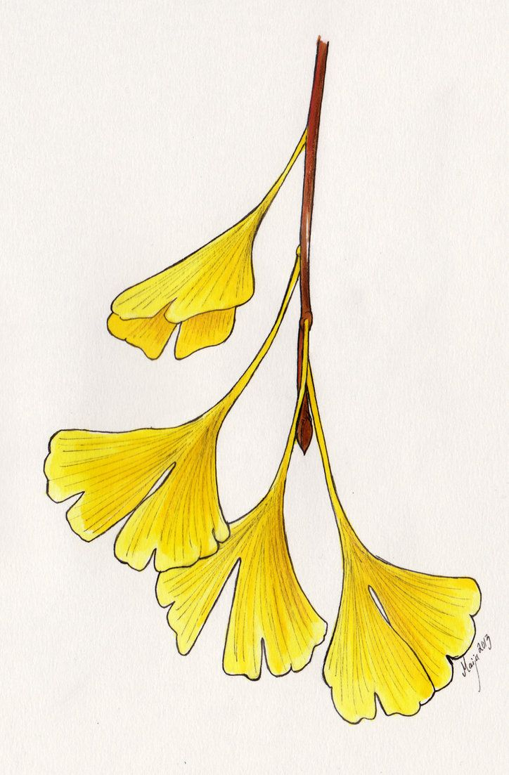 19 best Ginkgo Project images on Pinterest   Christian quotes, Cs ...