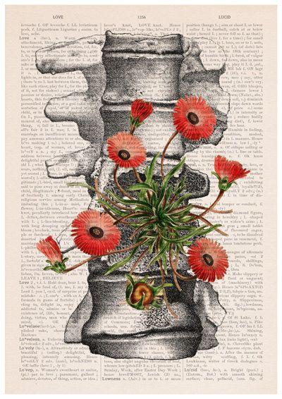 Vertebrae bones A3 poster anatomical art Human anatomy by PRRINT