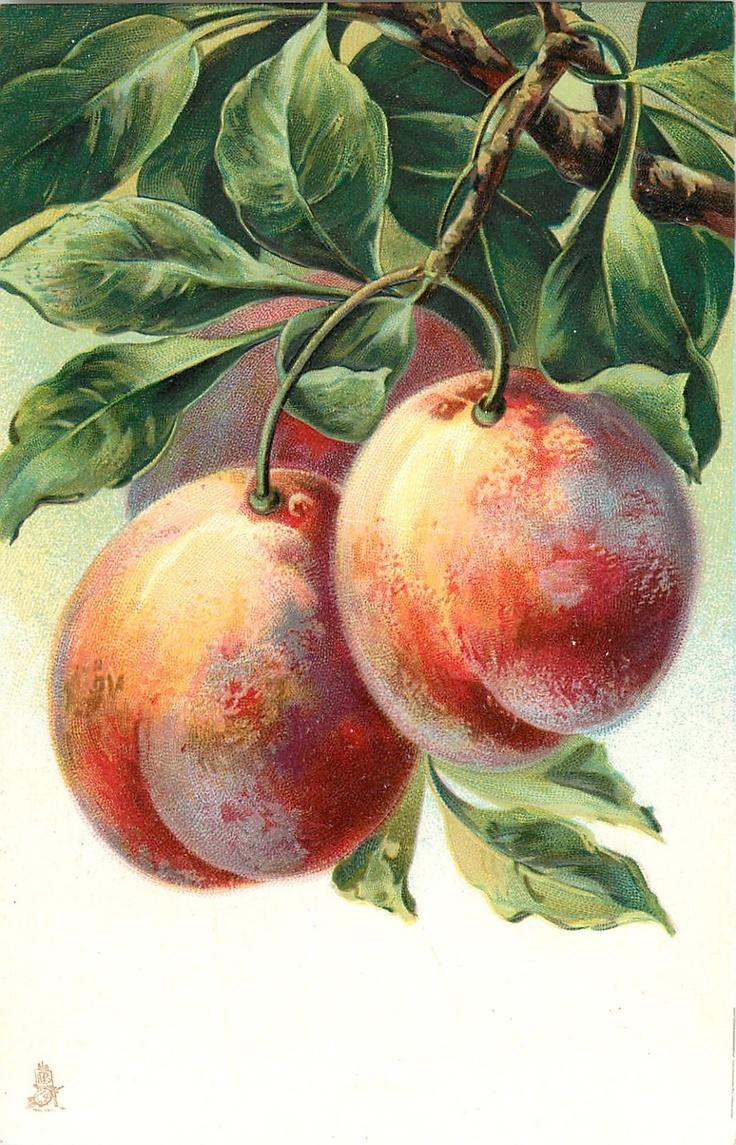 Открытка персик