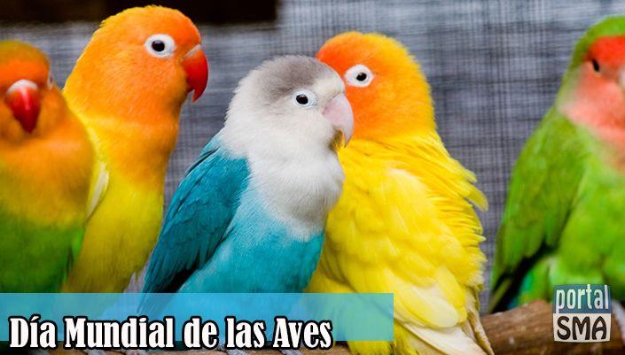 Invitación a vivir el Día Mundial de las Aves en San Miguel de Allende http://www.portalsma.mx/sma/index.php/noticias/2203-invitacion-a-vivir-el-dia-mundial-de-las-aves #SanMigueldeAllende #SMA #Aves #DíaMundial