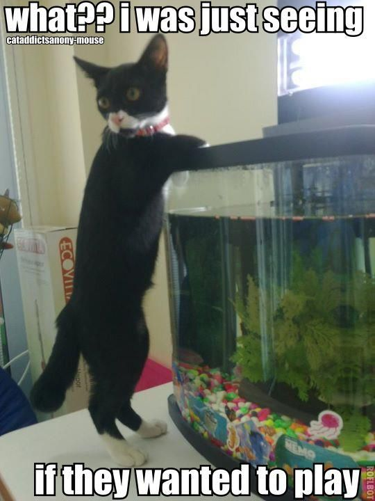 I had a cat slip and fall in the tank once! !! So funny!!! Check more at http://hrenoten.com
