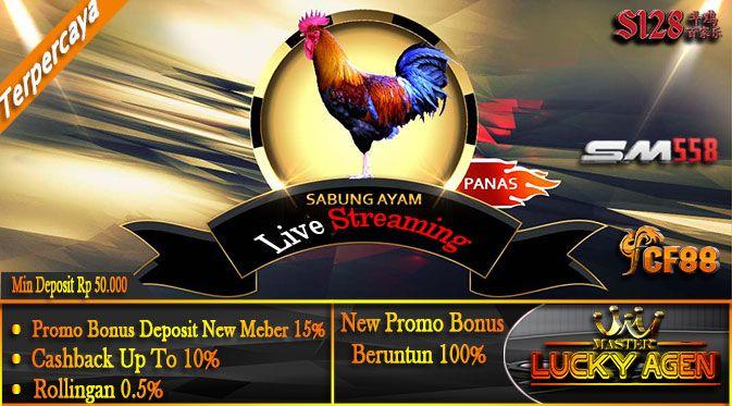 Sabung Ayam SM558 | Manfaat Cicak Bagi Ayam Aduan