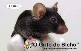"""""""O GRITO DO BICHO"""": Juízo da 16ª Vara Federal decide que UFMG poderá u..."""