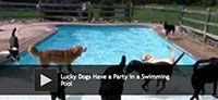 Lucky Dogs Have a Party in a Swimming Pool