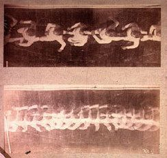image- Two chronophotographic studies of a run taken from overhead, 1887