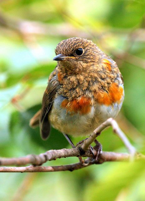 Its common in spring and summer to find young birds sitting on the ground or hopping about without any sign of their parents