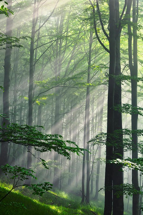 Fleeting Beams by Evgeni Divev; forest in Bulgaria at sunrise