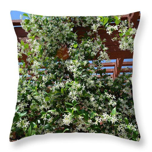 """Jasmine Vine Throw Pillow for Sale by Aimee L Maher Photography and Art Visit ALMGallerydotcom. Our throw pillows are made from 100% spun polyester poplin fabric and add a stylish statement to any room. Pillows are available in sizes from 14""""x14"""" up to 26""""x26"""". Each pillow is printed on both sides (same image) and includes a concealed zipper and removable insert (if selected) for easy cleaning. Ships within 2-3 business days"""