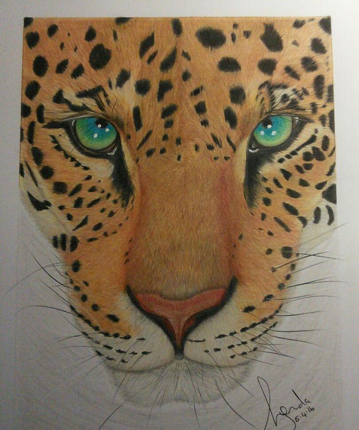 'Aixa' (pronounced Ay-sha) coloured pencil drawing of a Jaguar, by Lynda Colley Originals