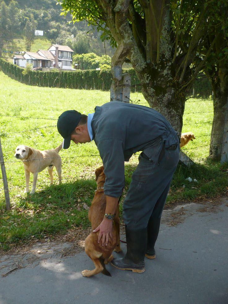 Tercera clase: enseñarla a estar tranquila con perros ladrandola